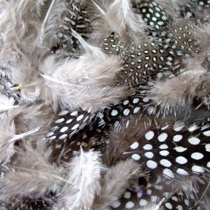 BI2592 Monochrome Speckled Feathers
