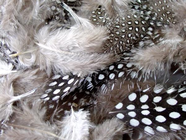 BI2592 Monochrome Speckled Feathers